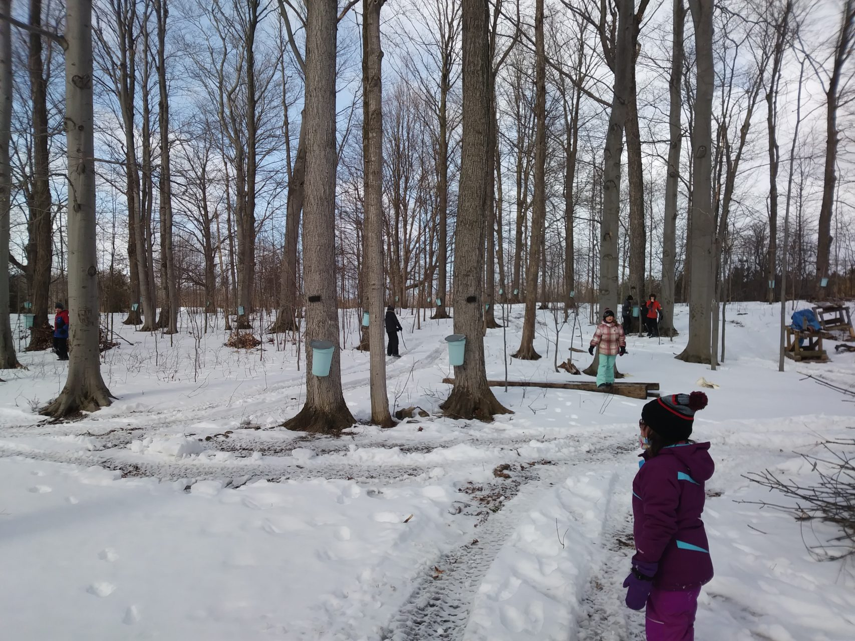 Skating, Maple Tree Tapping and so much more!