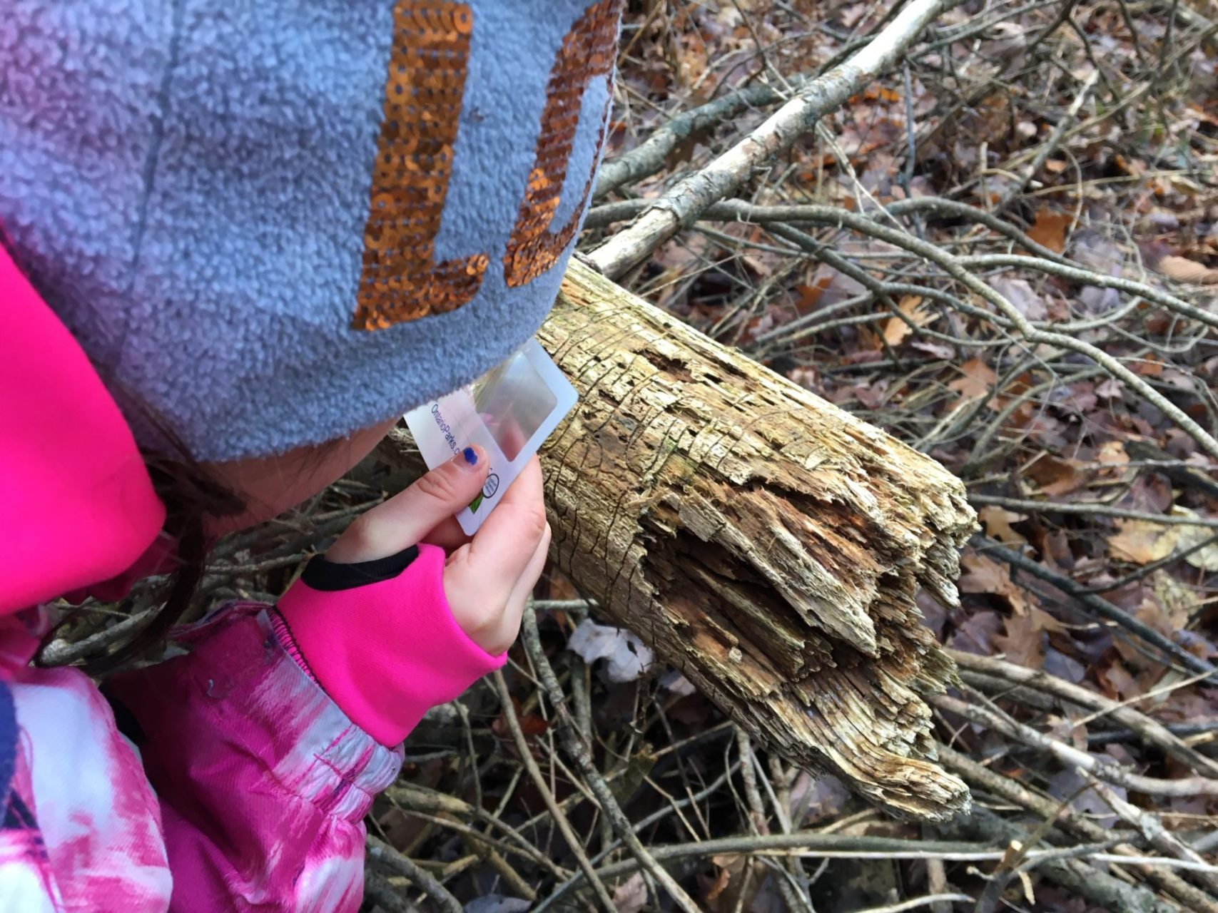 Fishing, Ash Trees and Shelter building